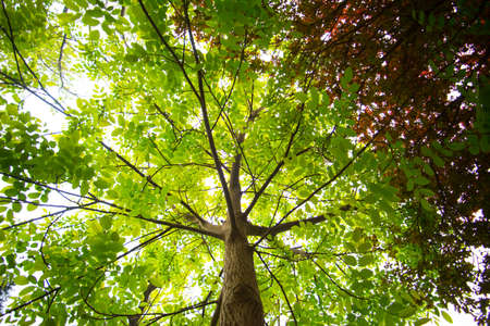 Transmission of sunlight from the lush canopy top