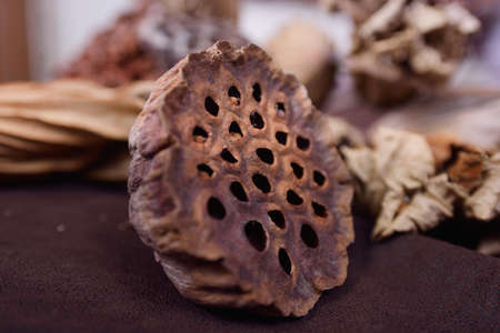 seedpod: Mature dried seedpod of the Lotus in isolation on a brown background