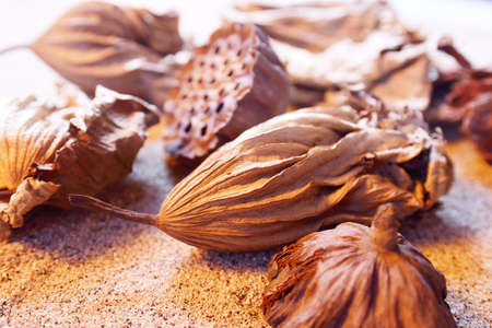 seedpod: Dried leaves and seedpod of the Lotus in the sand