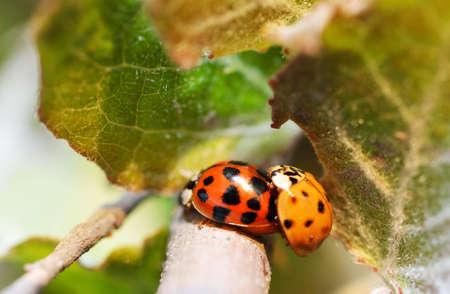 Spring green plants and lucky ladybug macro photo