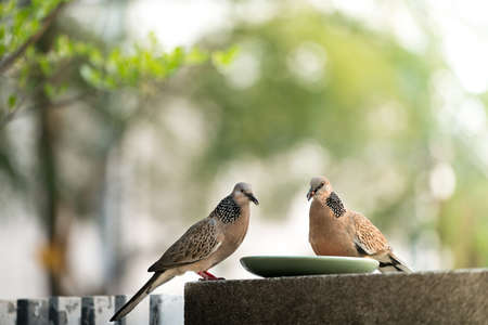 sharing food: Sharing food to birds, two pigeons eating Stock Photo
