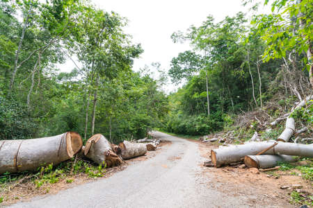 road and path through: Fallen trees cut to clear path for road through tropical rainforest