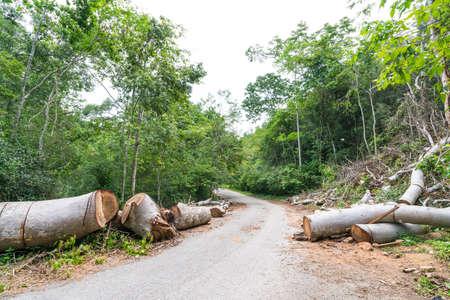Fallen trees cut to clear path for road through tropical rainforest