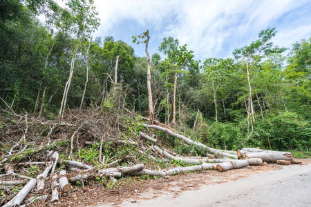 environmental issue: Trees cut down in the forest, deforestation or global warming concept, environmental issue Stock Photo