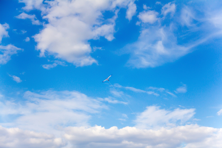 freely: bright sunny summer day in high blue sky freely hovering kite flying stork Stock Photo