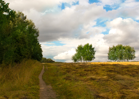 walk in the countryside among fields and birch pleasant autumn day in the silence of the city Stock Photo