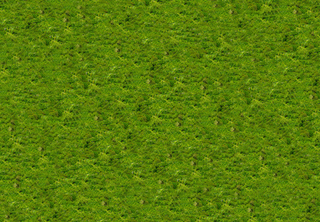 background texture of natural wood with green leaves natural biological basis of carpet moss