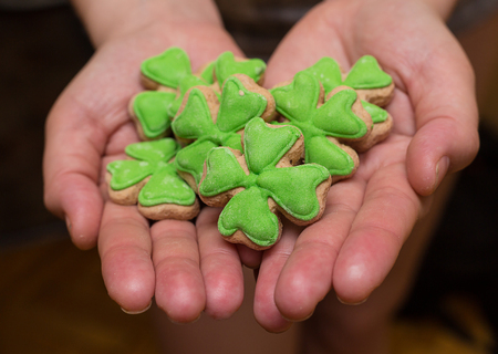 six delicious gingerbread sponge cakes covered with green mastic crochet pattern lie on the palms of a close-up. Celebrating St. Patricks Day Stock Photo