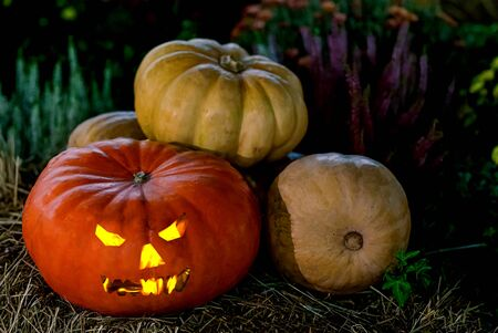 Halloween pumpkin lantern head jack, burning eyes on an autumn background