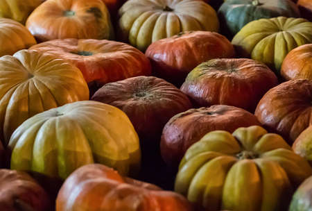 vegetable background pattern set of pumpkins orange yellow close-up