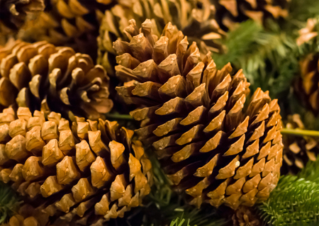 brown cone close-up on a background of a green spruce branch close-up, seasonal winter decor foundation Stock Photo
