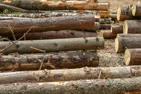 wooden trunks long logs with bark untreated background building rustic natural material Stock fotó