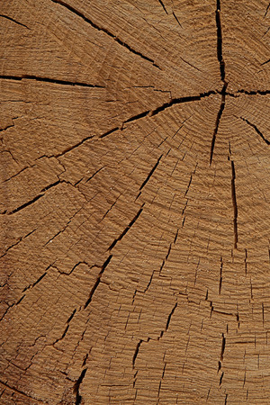 wood texture cracked beige lines old surface natural surface design rustic