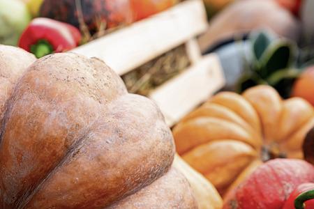 large orange pumpkin closeup part foreground copy space blurred background vegetables