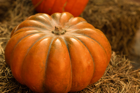 ripe tasty orange pumpkin big ribbed vegetable autumn seasonal on a natural base Stok Fotoğraf