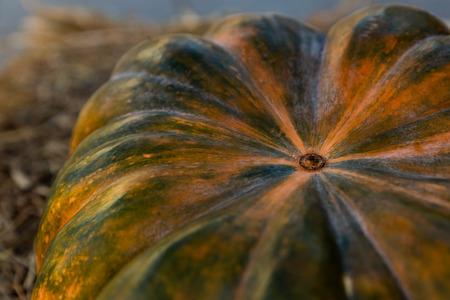 orange green dark pumpkin autumn vegetables harvest closeup ribbed mature