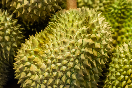 Durian is a big green thailand fruit spiny close up. Royal Fruit of Thailand, ban on fruit hotel Imagens