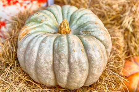 green light ribbed pumpkin on beige hay rustic farmer close up eco farmer products