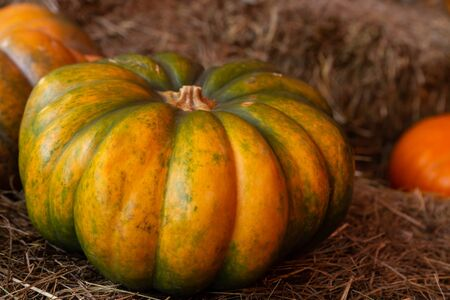 big ripe pumpkin ribbed harvest autumn rustic style on a pile of hay background vegetable