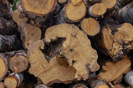 large small birch log fell end year rings pattern eco rustic close-up row of trees