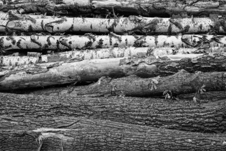 horizontal trunks logs birch monochrome background logging construction eco design Banco de Imagens