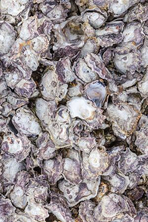gray oyster shells on stone texture vertical pattern base marine design natural