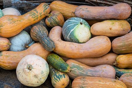 long orange pumpkins round green set of vegetables autumn ripe base background