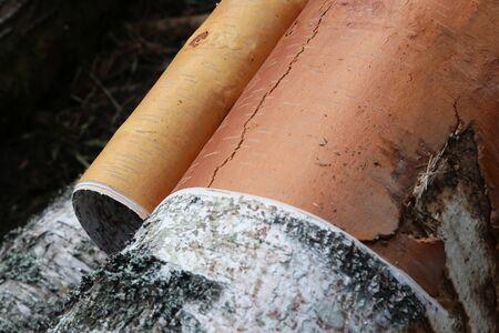 fresh sawn logs birch bark bark removal preparation construction