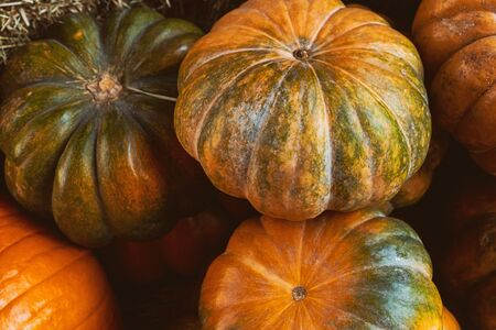 pattern orange green pumpkin mini whole harvest a bunch of vegetables 스톡 콘텐츠