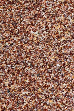 shell crushed background pattern composed of mollusks brown marine tropical vertical base Stock Photo