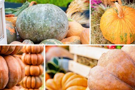 set of vegetable assortment a collection of pumpkins big orange tower and mine on hay 版權商用圖片