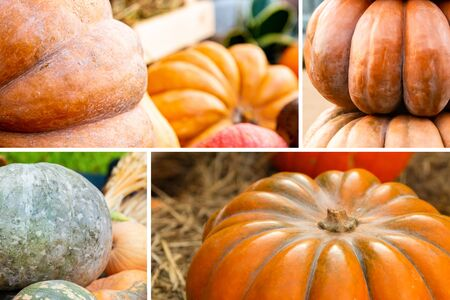 a collection of orange pumpkins large honeycombs-block vegetable pattern 版權商用圖片