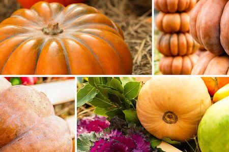 vegetables pattern set pumpkins orange and green collection autumn harvest
