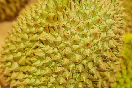 durian royal fruit of thailand close-up spiked and strongly smelling