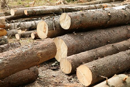 sawmill many pine logs with brown bark lie on the ground background Stock Photo