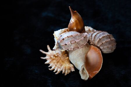 set of nautilus shells and with sharp thorns lies on a black background