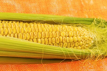 fresh yellow corn cob in green leaves close-up, tasty vegetable