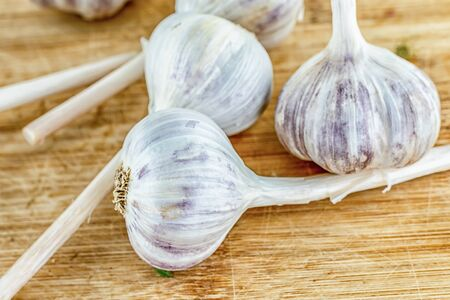 white garlic whole head, traditional vegetable seasoning strongly smelling Standard-Bild