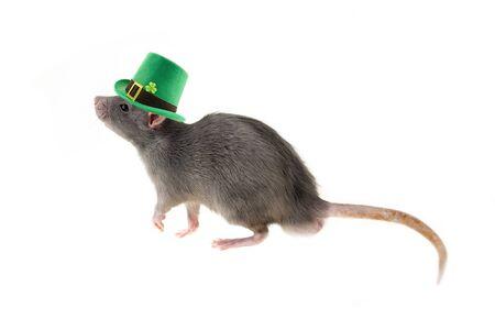 st patrick rat hat green clover fluffy gray cute white isolated background festive decor Banco de Imagens