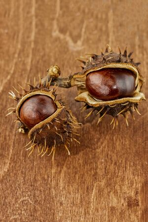 two chestnuts brown old and cracked with big brown fruits on a wooden background