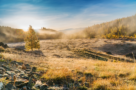 Morning Fog in Mountains. Hoarfrost on Grass and Trees. Altai. Siberia Stock Photo