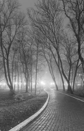 Foggy evening in the city park  Black and white