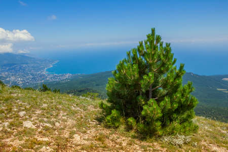 A panoramic view of Yalta city from Ai-Petri mountain, Crimea, Ukraine photo