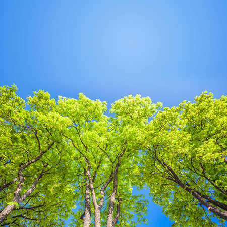 Green branches in a wood and blue sky