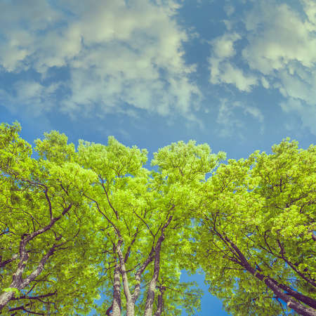 colorized: Stylized instagram colorized vintage green branches in a wood and blue sky