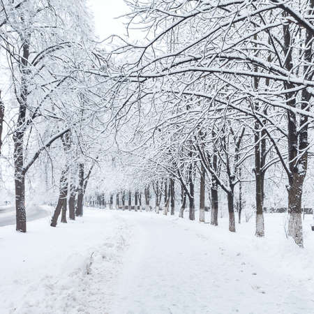 winter city park in morning Stock Photo