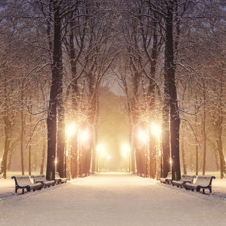 enero: Sendero en un parque de la ciudad fabulosa de invierno