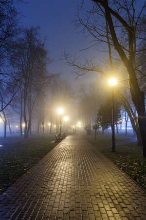 path to romance: The avenue of autumn city park at night