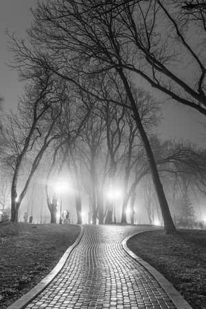 nature photo: The avenue of autumn city park at night. Black and white.