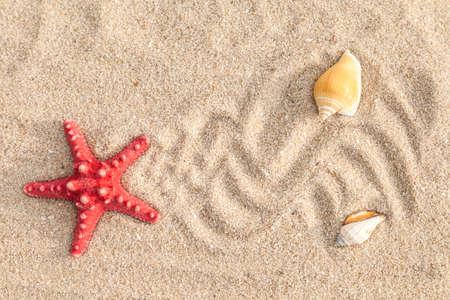 white sand beach: Starfish with shells on sandy beach
